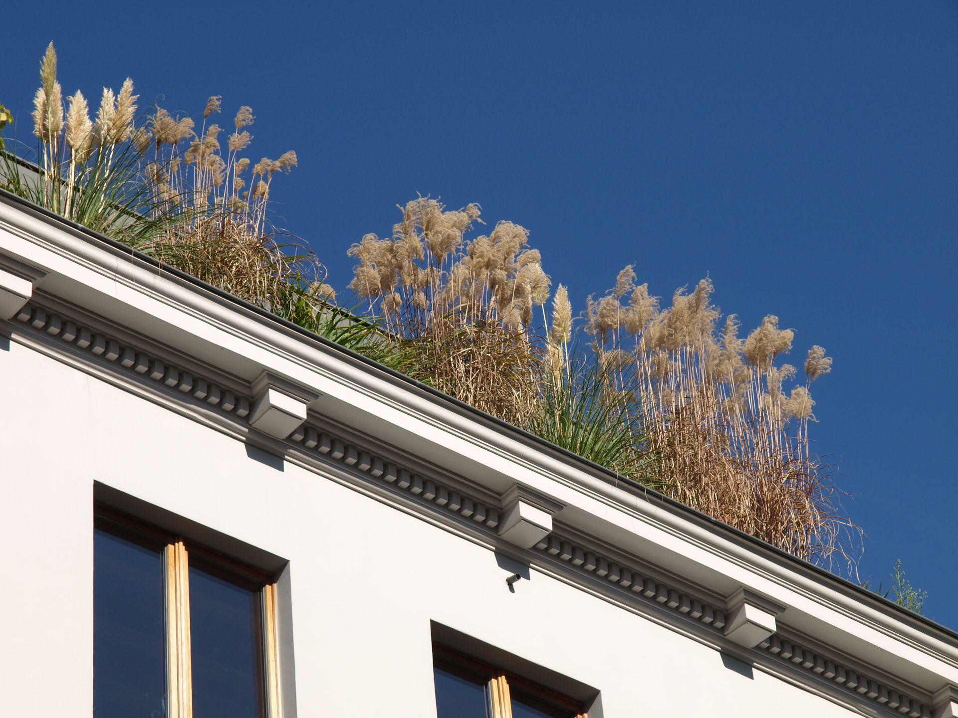 Dachbegrünung, Kompost, Dachgarten