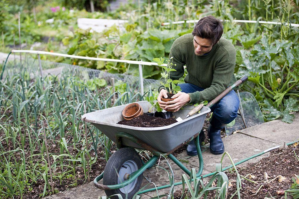kompost im hobbygarten richtig anwenden umwelt und gartenparter vogel. Black Bedroom Furniture Sets. Home Design Ideas