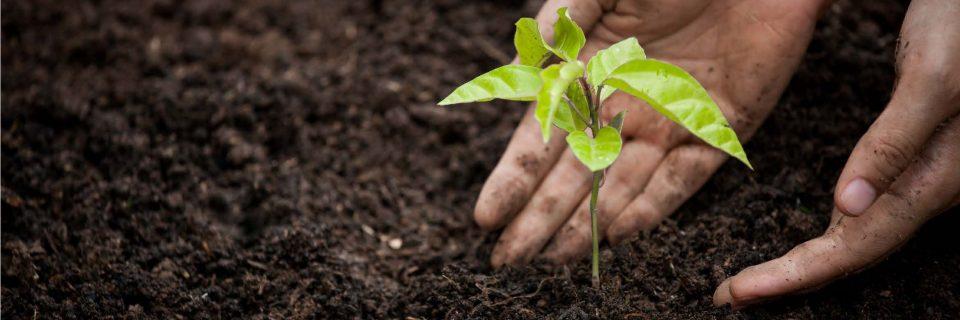 Perfekte Angebote für umweltbewusste Hobbygärtner von Ihrem Umweltpartner